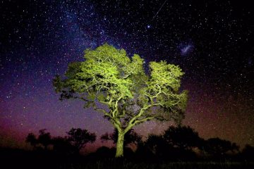 A marula tree under the Stary night sky in the Sabi Sands. (Photo: Jeandre Gerding0