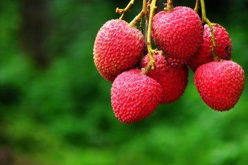 El lychee es una fruta rica en vitamina c, lo cual la cual la hace una excelente alternativa para aquellos que no toleran los cítricos. (Dreamstime)