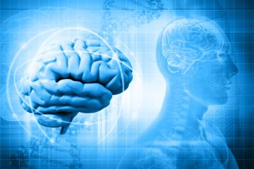 Los neurólogos también observaron diferencias en la localización del hematoma cerebral. En hombres es más frecuente el hematoma profundo mientras que en mujeres es más común en la zona lobular del cerebro, más superficial. (Dreamstime)