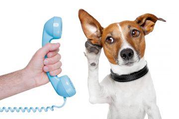 La próxima vez que le hables a tu perro, recuerda que el entiende lo que le estás diciendo.