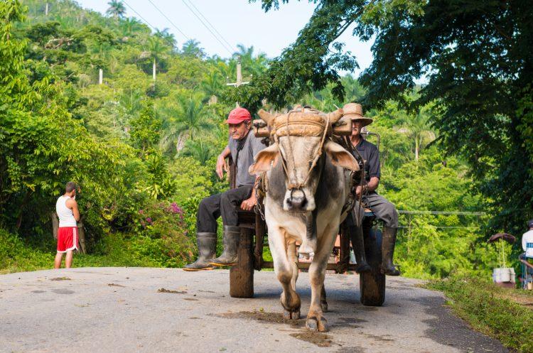 """""""La guerra es una cosa que es muy difícil porque es a muerte. Es muy dura para cada uno de nosotros y para todo el pueblo"""", apostilla """"Alexis"""", de rasgos indígenas y apenas 25 años, 8 de ellos en las FARC. (Dreamstime)"""