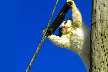 El Gato eléctrico
