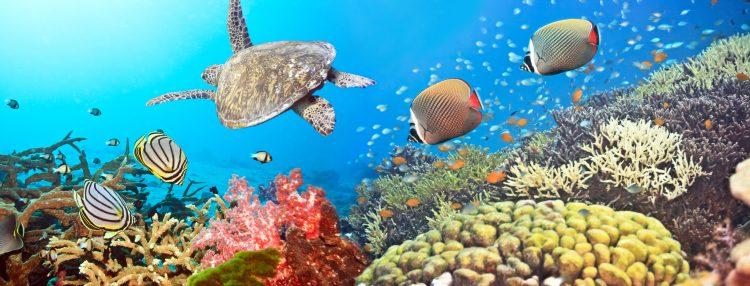De acuerdo con datos de Tortuguías, el año pasado los perros mataron a 8 tortugas en el proceso de anidación. (Dreamstime)