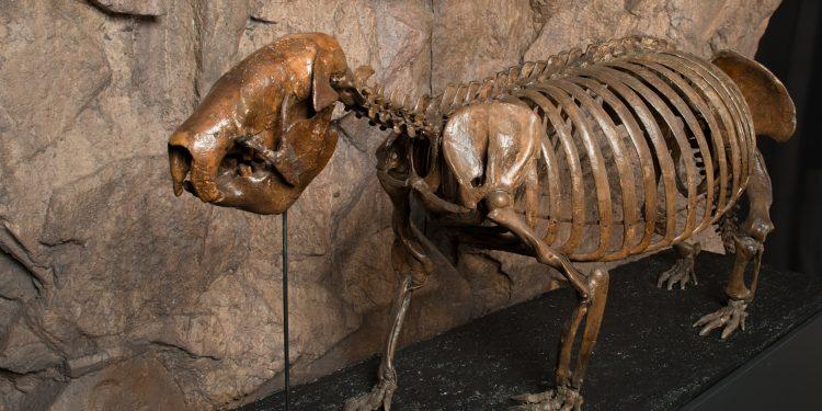 4a.-Giant-sloth_DF-750x375 ¡CUBA! ABRE SUS PUERTAS EN EL  AMERICAN MUSEUM OF NATURAL HISTORY