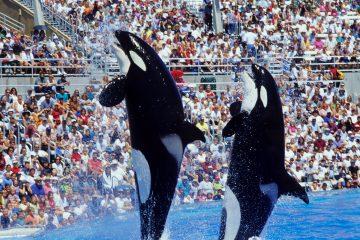 El centro dará especial prioridad a la experiencia de los visitantes con los animales en cautiverio, además de ofrecer atracciones de grandes dimensiones, un acuario y la última tecnología para convertir la visita en una experiencia inolvidable, agregó. (Dreamstime)