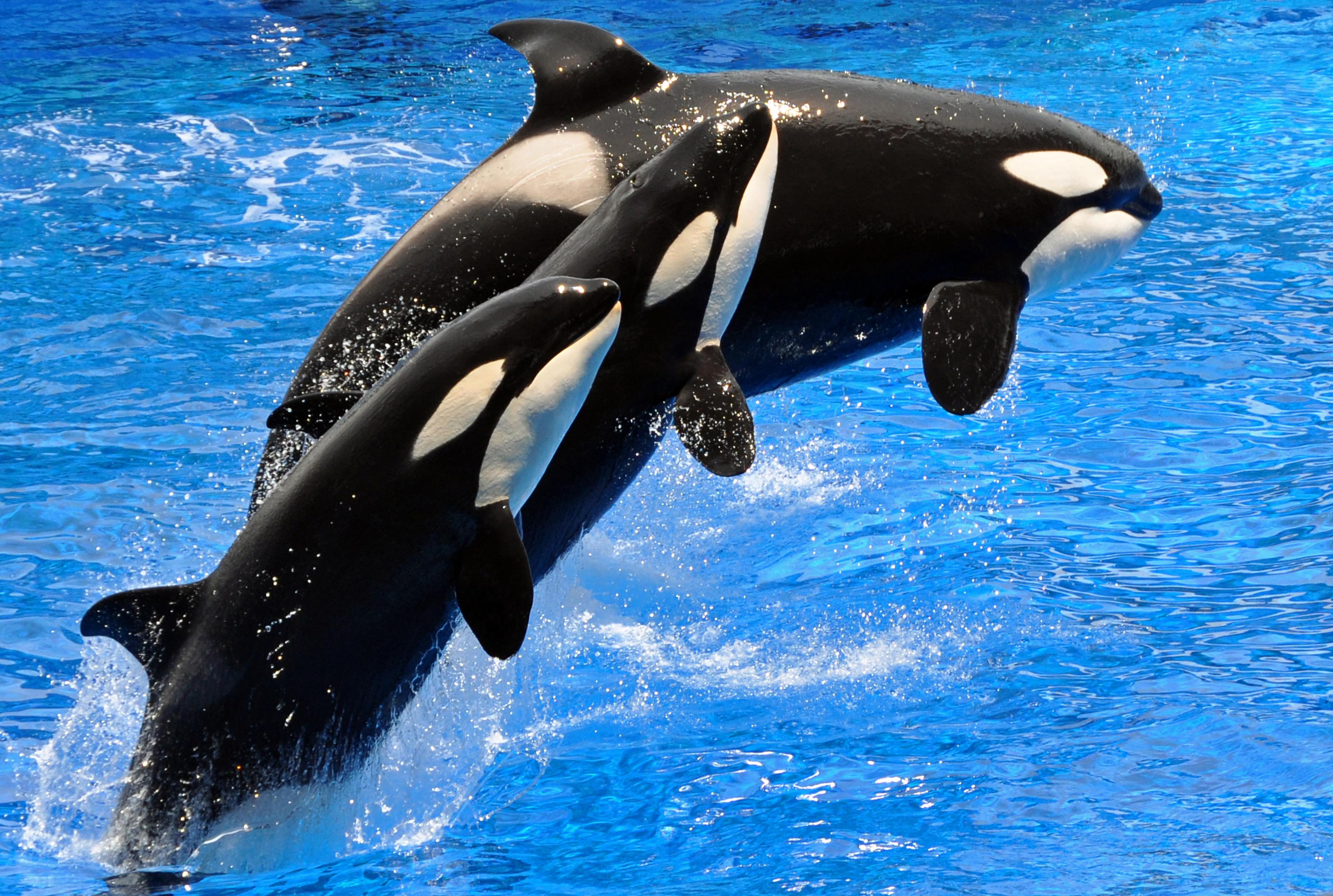 dreamstime_xl_14222317 SeaWorld refuerza cambio de estrategia con nueva montaña rusa y menos orcas
