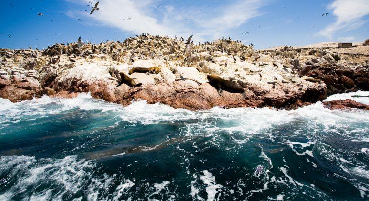El buen estado de conservación de la Reserva de Paracas se ha visto reflejado en el número de visitantes de los últimos años, y que el 2016 alcanzó su pico mayor cuando pasó de 223.132 en 2015, a 327.952 visitantes, convirtiéndose así en la segunda área protegida más importante del país. (Dreamstime)