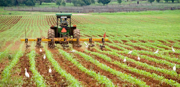 """El titular de Agricultura dijo además que continuará la ampliación del Programa de Control Biológico del insecto que transmite el """"citrus greening"""". (Dreamstime)"""