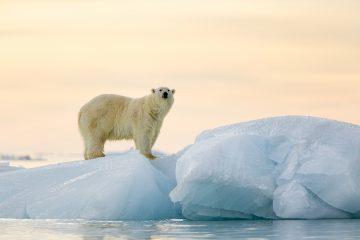 """En este sentido, el secretario ejecutivo de la Comisión Intergubernamental Oceanográfica de la UNESCO, Vladimir Ryabinin, destacó como uno de los principales problemas del océano Ártico la acidificación de sus aguas, que provoca situaciones """"impredecibles"""" en los ecosistemas marinos. (Dreamstime)"""