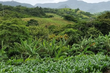Los cultivos incluidos en esta iniciativa son la cañahua, el amaranto, el tarwi, la arracacha, el yacón, el isaño y la quinua, que tienen altos niveles nutricionales y medicinales y fueron utilizados por muchos años por los indígenas de la región andina, pero su producción y consumo se fue perdiendo con el tiempo. (Dreamstime)