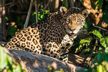 """Las autoridades de Mato Grosso también trabajan para hacer viable el """"corredor del ecoturismo"""", una conexión que permita que los miles de turistas que visitan Perú y pasan por Machu Pichu también puedan extender su viaje hasta la Amazonía y el Pantanal brasileño. (Dreamstime)"""