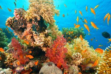El biólogo marino afirmó que, según un monitoreo comparativo entre 1998 y 2018, el esqueleto de los corales es un 20 % menos denso, esto significa que no depositan el mismo carbonato de calcio que antes. (Dreamstime)