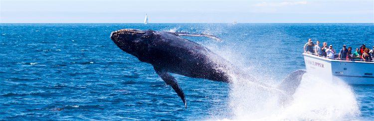 El mal tiempo que imperó entre el martes y miércoles impidió que un equipo del Tela Marine remolcara la ballena, que medía 22 metros de largo, para enterrar su restos en tierra firme, dejando solamente su esqueleto para exponerlo de manera permanente en la ciudad caribeña de Tela. (Dreamstime)
