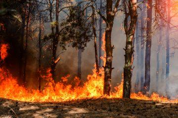 Al menos 33 animales, incluidos tres perros, gatos, serpientes y una tortuga de 300 libras, perecieron en el incendio, indicaron los bomberos en las redes sociales. (Dreamstime)