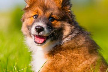 El comunicado detalla que junto al personal del Humane Society of the United States se han logrado realizar exitosamente clínicas de esterilización y vacunación de mascotas, impactando al día de hoy a unos 25.000 animales. (Dreamstime)