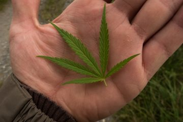 Entre los más jóvenes, la franja que va de los 15 a los 24 años, que son los mayores consumidores de cannabis, la tasa permaneció en un 30 %. (Dreamstime)