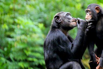 """""""Los humanos necesitamos compartir información, necesitamos el lenguaje por nuestra motivación intrínseca de compartir; los primates carecen de esta motivación"""", explicó. (Dreamstime)"""