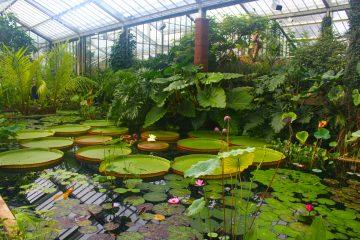 Los jardines albergan numerosos tesoros arquitectónicos como el Kew Palace, el edificio más antiguo del complejo que fue la casa de verano del rey Jorge III durante el siglo XVIII, o la Gran Pagoda, que ha sido restaurada recientemente. (Dreamstime)