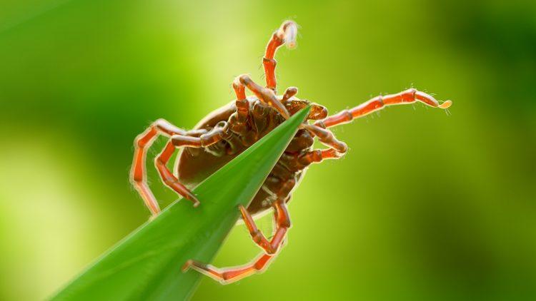 Protégete de las garrapatas y los mosquitos en temporadas frías. (Dreamstime)