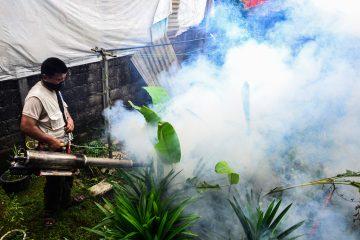 """Las cuatro personas que son las últimas contagiadas por el virus que transmiten los mosquitos Aedes aegypti """"recibieron tratamiento médico y se espera que se recuperen totalmente"""", señalaron las autoridades de salud. (Dreamstime)"""