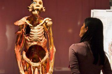 La exhibición da cuenta del índice de mortalidad del COVID-19, de su demoledor impacto en el sistema respiratorio, así como de los efectos en el sistema digestivo que incluye la pérdida de apetito, náuseas y otros síntomas.  (Dreamstime)