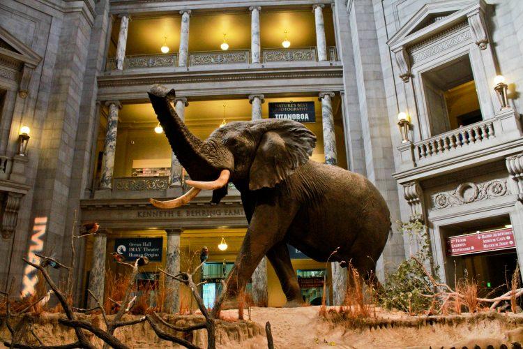 La medida afecta a ocho museos en Washington, entre ellos algunos de los más visitados del país como la Galería Nacional de Arte, el Museo Nacional de Historia Americana o el Museo Nacional del Aire y el Espacio. (Dreamstime)