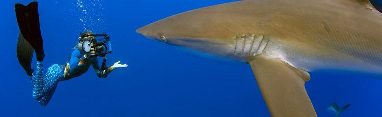 A diferencia de la costa este de Florida, las mordeduras de tiburón en las playas que dan al Golfo de México se producen rara vez. (Dreamstime)