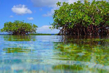 Virginia Key, un islote en la bahía Vizcaína, conserva algunos de estos escasos bosques tropicales formados por especies botánicas que crecen en el agua salada que alguna vez poblaron las costas del sur de Florida y que el desarrollo inmobiliario diezmó. (Dreamstime)