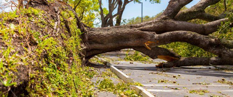 El huracán sigue teniendo categoría 4 en la escala de Saffir-Simpson (de un total de cinco) y alejado de tierra. (Dreamstime)